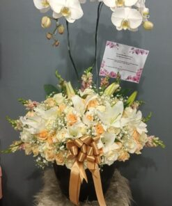 bunga meja anggrek